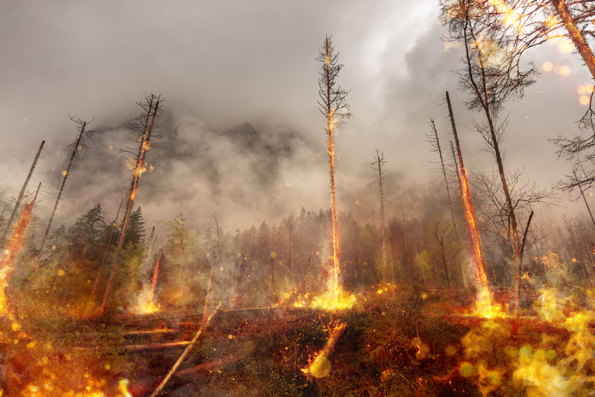Perpetrating Arson in California